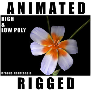 flowers open animation 3D model
