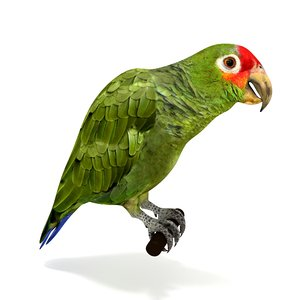 red lored amazon parrot 3D