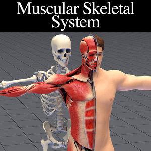 baseman muscles skeleton animation 3D