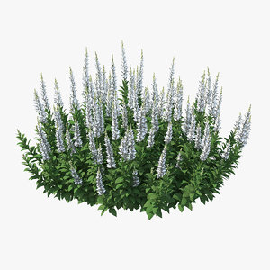 3D blooming meadow sage snow model