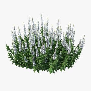 3D blooming meadow sage snow model