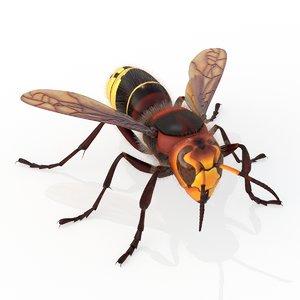 european hornet model