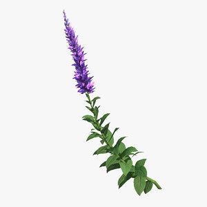 3D stem blooming meadow sage