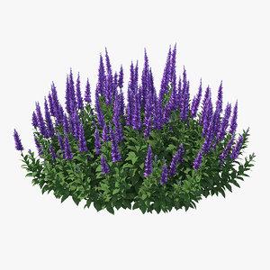 3D model blooming meadow sage salvia