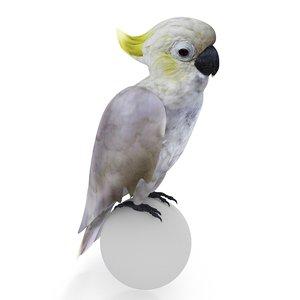 cockatoo cacatua 3D model