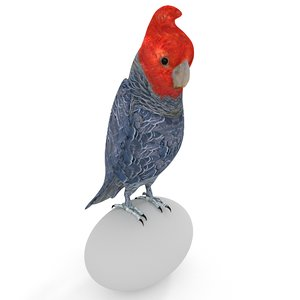 3D gang-gang cockatoo model