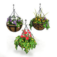 Hanging Basket Plants 1