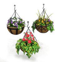 Hanging Basket Plants 1