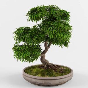 bonsai maple tree 3D model