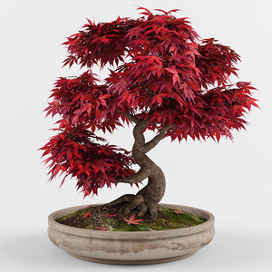bonsai maple tree model
