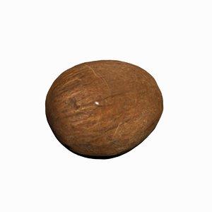 coconut fruits model
