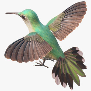 hummingbird bird wing 3D model