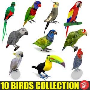 3D 10 birds parrot cockatiel