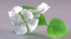 jasmine flower bouquet model