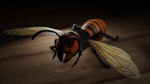 japanese hornet model
