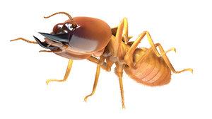 termite soldier 3D model