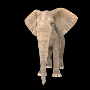 elephant animation model