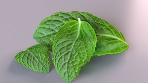 lemon mint leaf plant 3D model