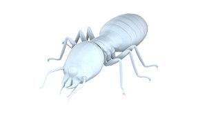 young termite 3D model