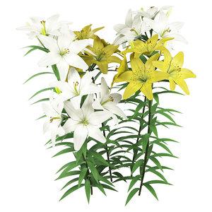 3D lilium lilies flowering plants