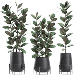 3D decorative trees pots ficus