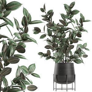 decorative trees pots ficus 3D