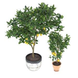 lemon trees model