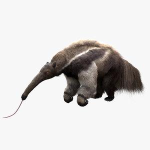 3D giant anteater model