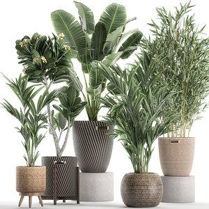 plants interior baskets 3D model