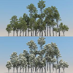 20 pinus nigra trees model