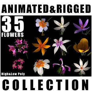 flowers animation model