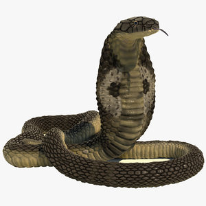 rigged indian cobra snake 3D