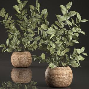 3D model decorative interior baskets ficus