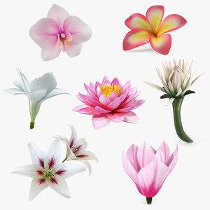 flowers 11 3D model
