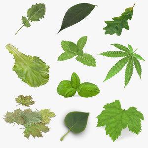 leaves 6 3D model