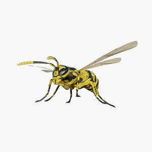 wasp 3D