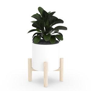 3D ficus lyrata ceramic pot