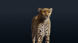realistic cheetah fur animation 3D