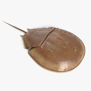 horseshoe crab 3D model