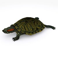 Tortoise type 02