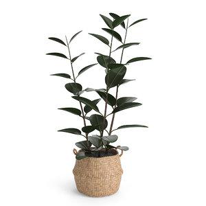 rubber plant eiseyen basket model
