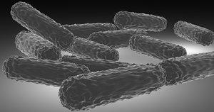 bacilli bacteria model