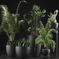 Plants Collection 24