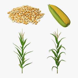 corn 2 3D