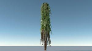 palm tree 3D