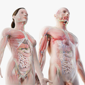 male female anatomy set 3D model