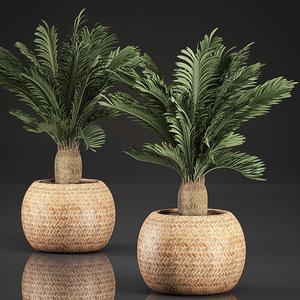 plants interior basket cycas 3D model