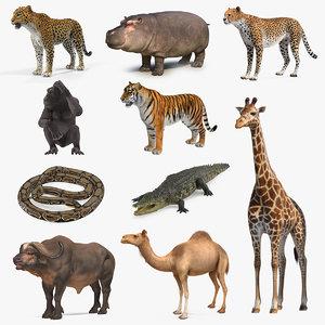 3D african animals 7