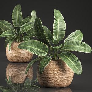 3D decorative interior basket strelitzia