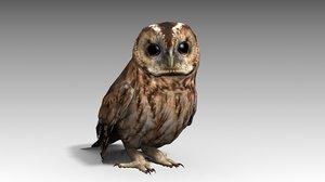 tawny owl 3D model